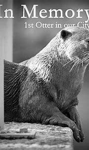 Daddy otter from Marina family suspected to have died ...