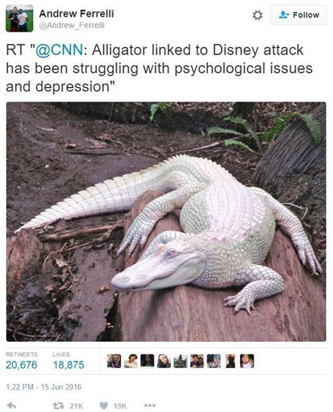 Alligator Memes - andrew ferrelli tweet 2016 disney resort alligator attack know your meme