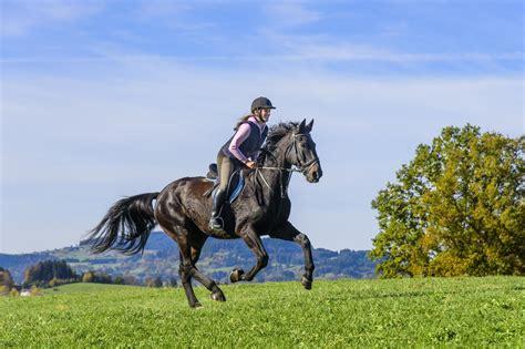 muskelaufbau pferde richtig bewegen und fuettern