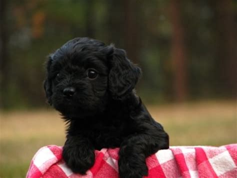 dog  puppy pictures  dog breeders