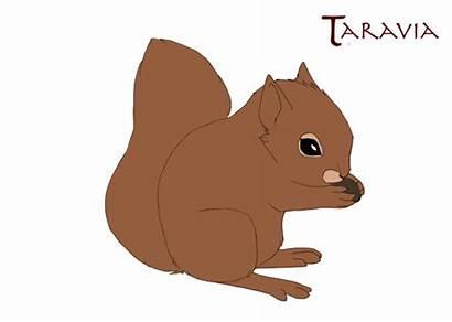 Squirrel Animated Clipart Animation Transparent Walk Cat
