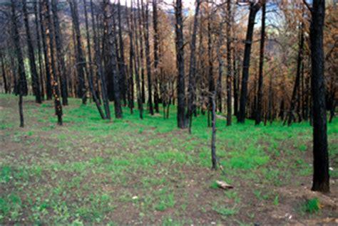 soil erosion control  wildfire