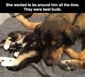 cat love dog animals quotes cats Friendship crying ...