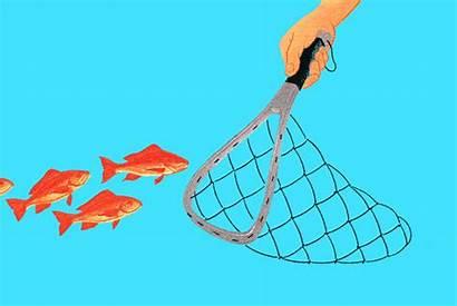 Fish Before Chinese Caught Stocks Bargains Think
