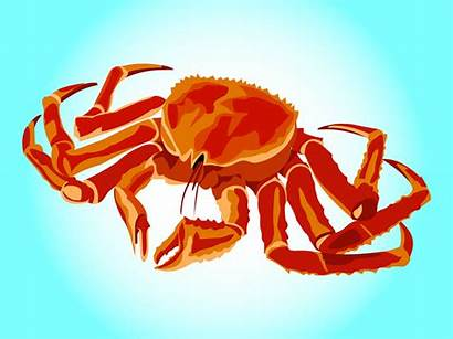 Crab Freevector Graphics