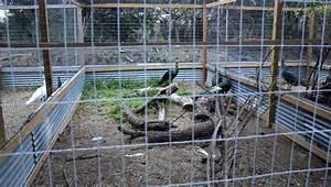 Vogelkäfig Selber Bauen : die besten 25 selber bauen vogelvoliere ideen auf ~ Lizthompson.info Haus und Dekorationen