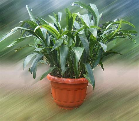 rental tanaman hias bandung igzio rental tanaman hias