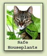 plants safe for cats gardening advice blogit