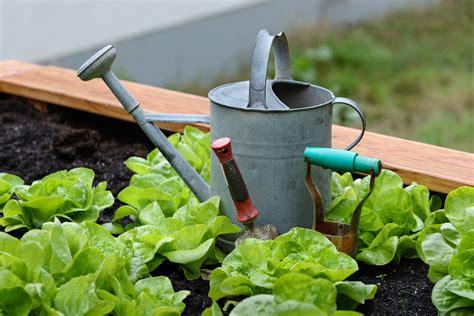 gardening picture commons photo challenge 2016 october gardening voting wikimedia commons