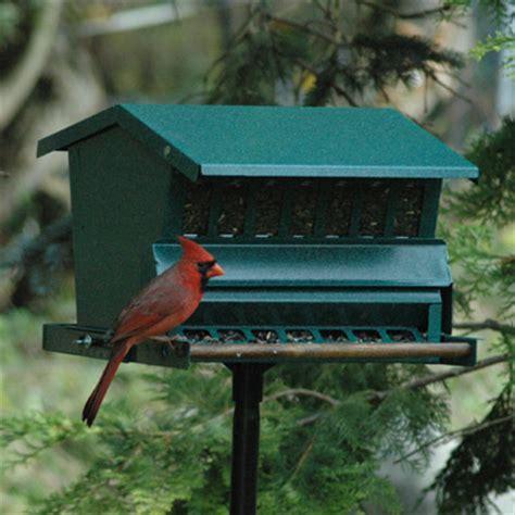 squirrel proof feeders nut feeders suet feeders kinsman