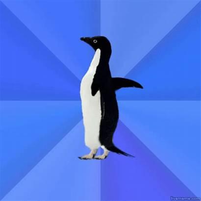 Penguin Awkward Meme Socially Memes Gifs Funny