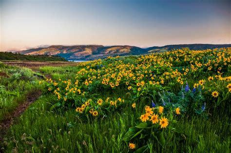 Columbia Gorge Oregon Hills Flowers Landscape F Wallpaper