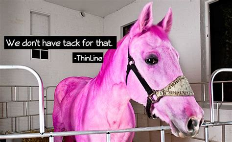 pink horse tack thinline presented don