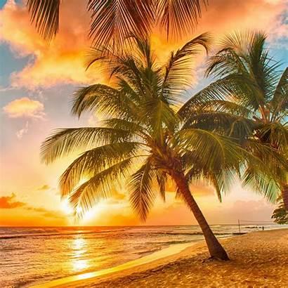 Tropical Palm Tree Ipad Wallpapers