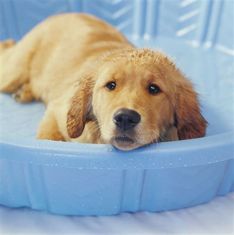 Hunde Kühlen Im Sommer