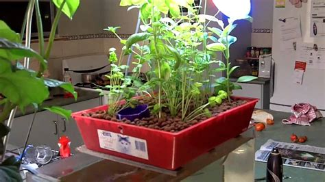 aquaponics kitchen herb garden youtube