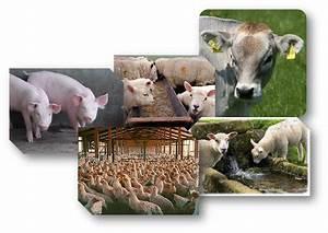 Animal En G : nutrici n mineral en producci n animal ~ Melissatoandfro.com Idées de Décoration