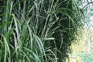 Schöne Pflanzen Für Den Garten : sch ne sichtschutzpflanzen f r den garten native plants ~ Michelbontemps.com Haus und Dekorationen