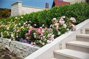 Kleine Gärten Ohne Rasen : garten ohne rasenfl che gestalten ideen von galanet ~ Watch28wear.com Haus und Dekorationen