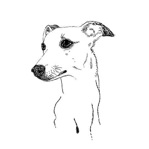 foto de framed italian greyhound dog print by made by menna