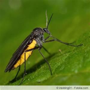 Fliegen In Der Erde : trauerm ckenlarven bek mpfen so geht 39 s ~ Lizthompson.info Haus und Dekorationen
