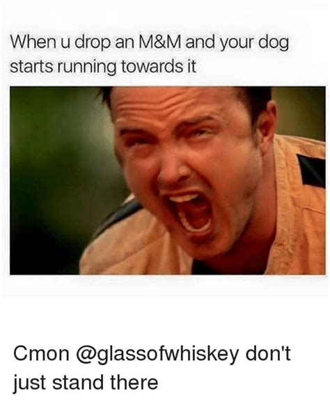 U Of M Memes - when u drop an m m and your dog starts running towards it cmon don t just stand there meme on