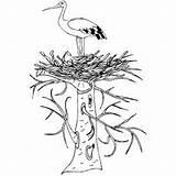 Stork Nest Coloring Birds Printable Sonlight Core Eve Adam Flags Freeprintablecoloringpages sketch template