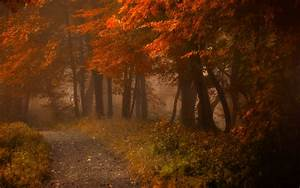 Path, Mist, Fall, Nature, Forest, Leaves, Landscape