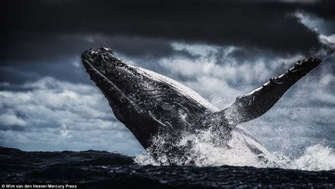 photographer wim van  heevers images capture chases