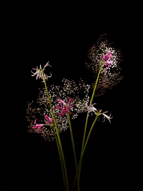 stunning flower bouquets photographed  resemble
