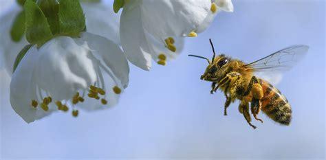 bee economist explains honey bees vital role  growing