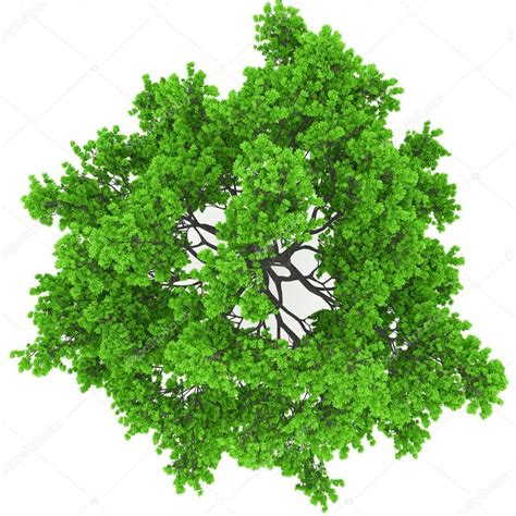 tree top view stock photo 169 3dvlaa 23511559