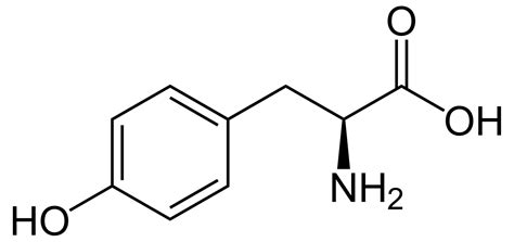 Tyrosine  Wikipedia. Best Vpn Service Providers Scrum Master Means. Broker Dealer Insurance Customer Service Cloud. Dolphin Shaped Submarine Emc Electric Company. Free Private Video Sharing Medical Air Flight. What Is A Data Analyst Foreign Business Loans. Best Auto Insurance Companies In Nj. Inpatient Treatment For Eating Disorders. Crm Document Management Top Preschools In Nyc