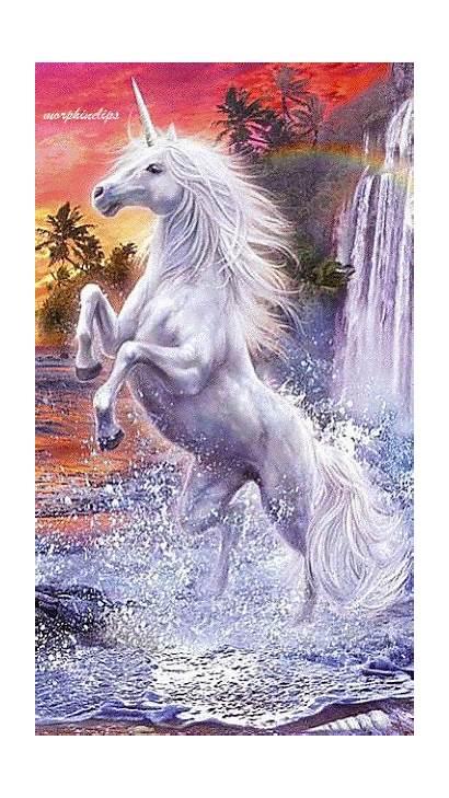 Unicorn Fantasy Gifs Unicorns Pegasus Fairies Creatures