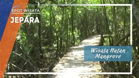 wisata hutan mangrove terlebat  pulau jawa   jepara