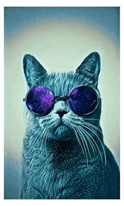 Cat Galaxy Glasses Picsart