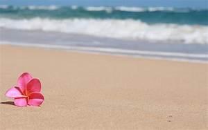 Sandy Beach Hawaii - WallDevil
