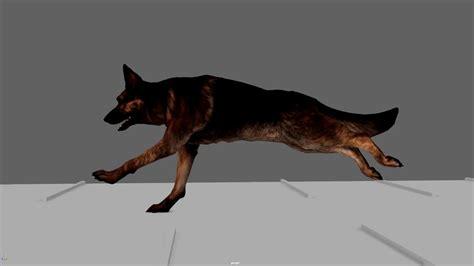 dog run cycle  animation youtube