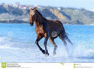 Horse in the water stock photo. Image of nature, beach ...