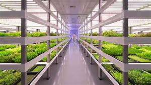 Growing Up  How Vertical Farming Works