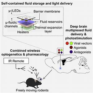 New Device Can Inject Drugs Into The Brain  U2014 Via Remote