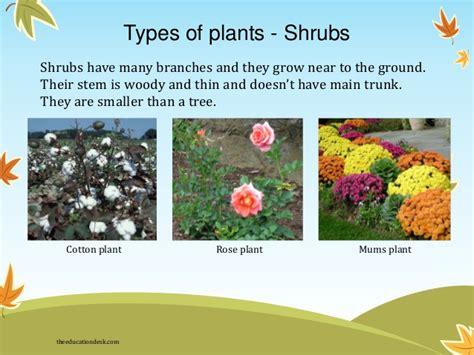 name of shrub environmental science evs plants class ii