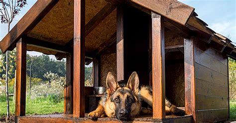 diy dog house plans carecom