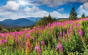 Filed nature sky sun flowers mountain green wallpaper ...