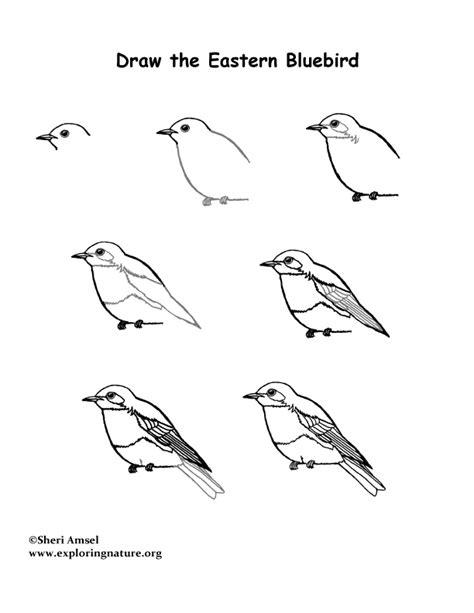 bluebird eastern drawing lesson