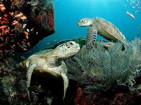 Interesanti fakti par bruņurupučiem. - Spoki