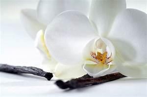 Achat Vinaigre Blanc En Gros : fonds d 39 ecran orchid es en gros plan blanc fleurs t l charger photo ~ Melissatoandfro.com Idées de Décoration