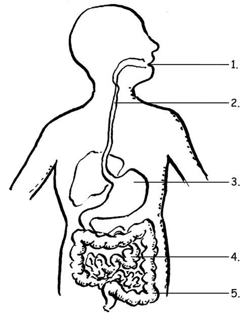 digestive system worksheet for worksheets for all