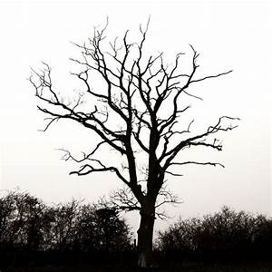 Dead tree | Jody and I went on a walk on Boar's Hill to ...