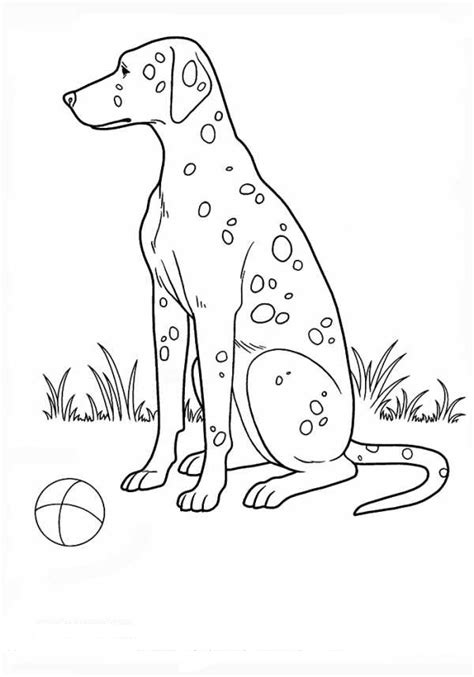 dalmatian coloring pages    print